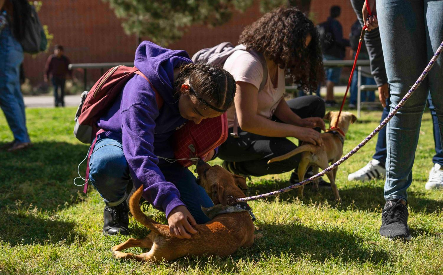 Students were able to play with dogs from the Baldwin Park Animal Care Center during their Adopt A Pet Event last Tuesday. Cal State L.A., 2019.