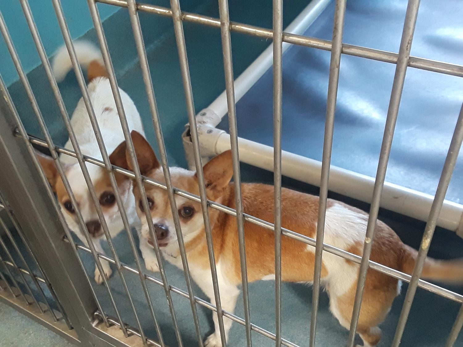 Dogs at the Baldwin Park shelter observe visitors.