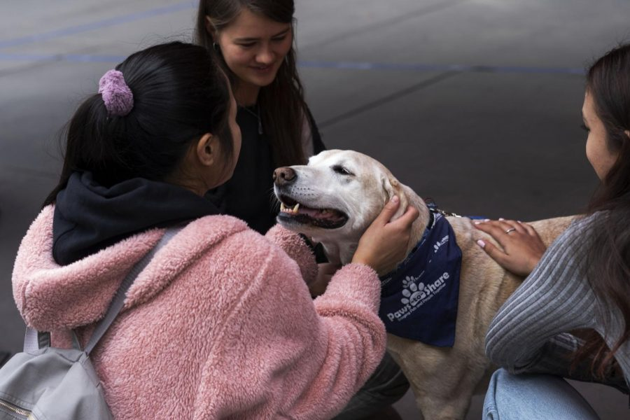 +A+labrador+retriever+greets+a+Cal+State+LA+student.+Paws-to-share+arrive+on+the+Cal+State+LA+campus+in+time+for+finals+week+to+destress+students.+