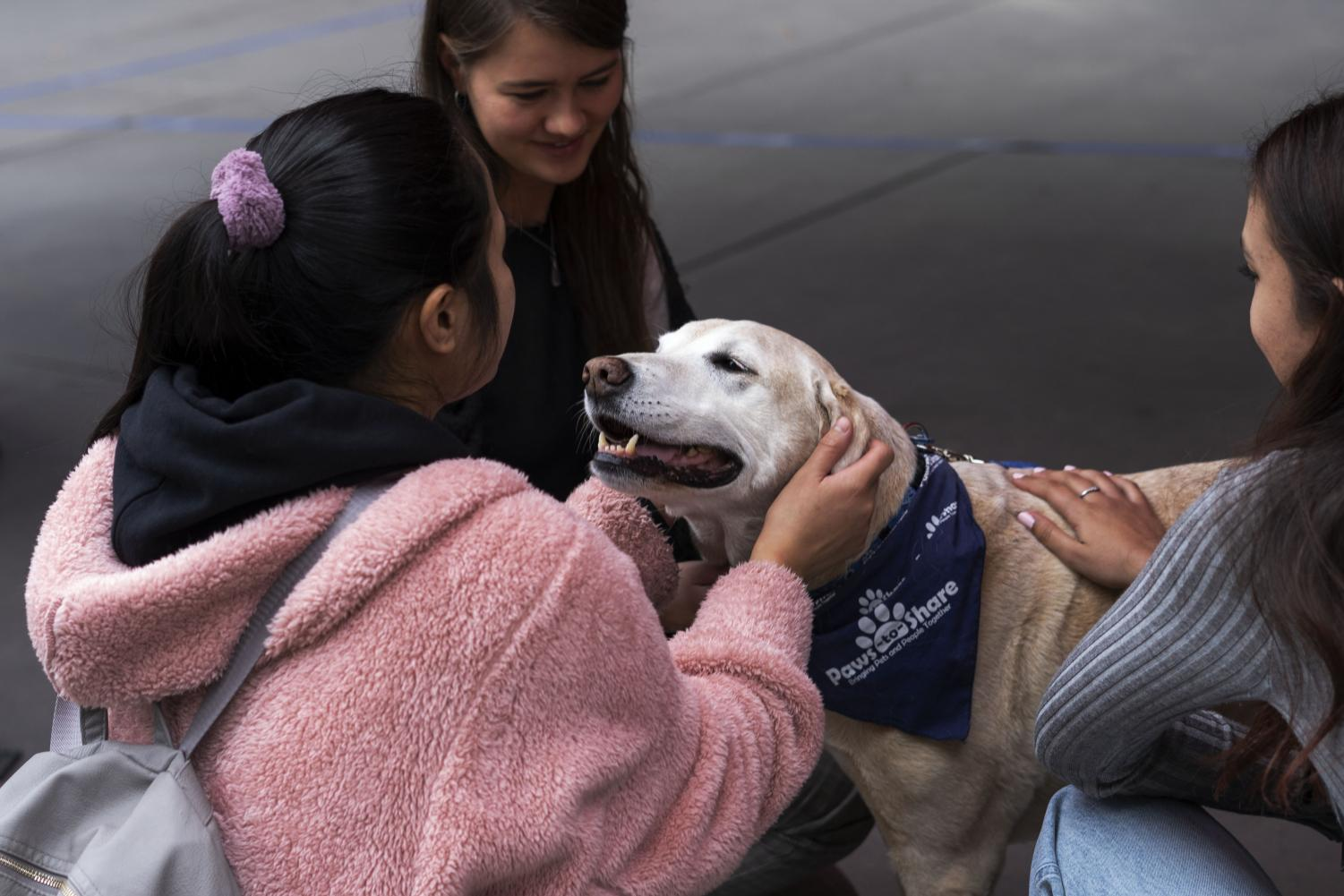 A labrador retriever greets a Cal State LA student. Paws-to-share arrive on the Cal State LA campus in time for finals week to destress students.